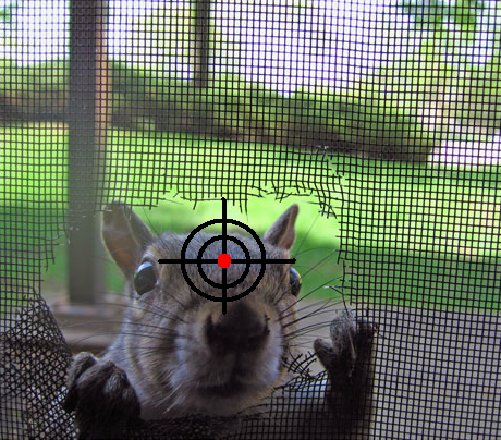 squirrel in the crosshairs