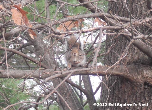 squirrel looking at camera