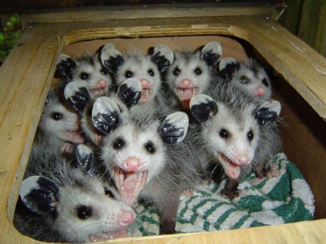 We're cuter than a box full of possums!!!