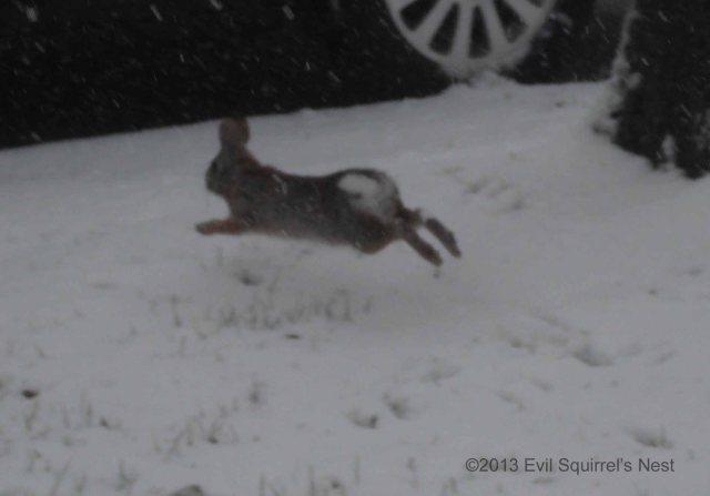 Yeah, you better run like a rabbit!