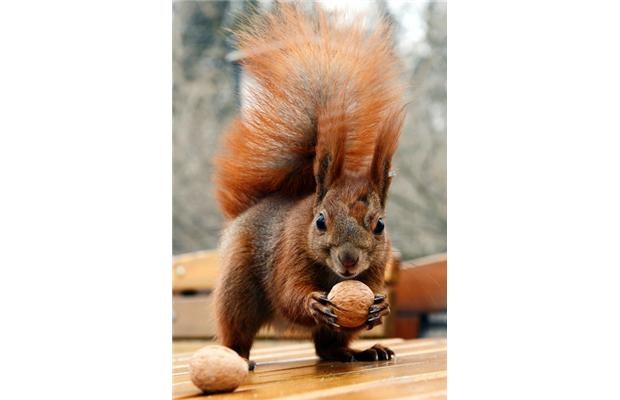 Why was the Polish squirrel unable to run from the dog? He'd just buried his nuts and got stuck!