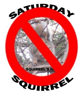 sat squirrel protest