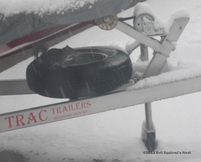 I sure hope this is a snow tire!