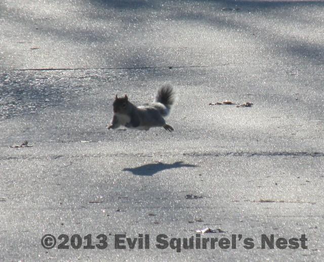 #47 - Hover Squirrel