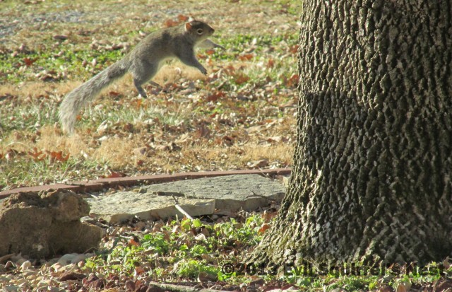 Easy breezy beautiful hover squirrel.