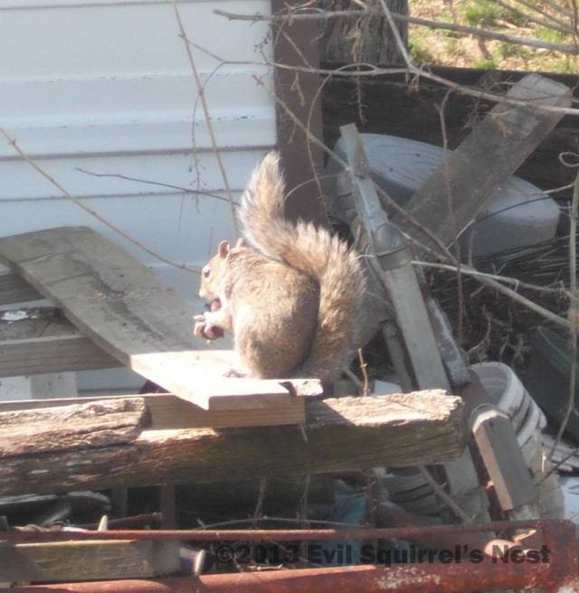 Catchin' some rays.... Eatin' some nuts....