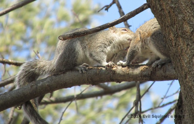 Squirrel nuzzles are so adorable!