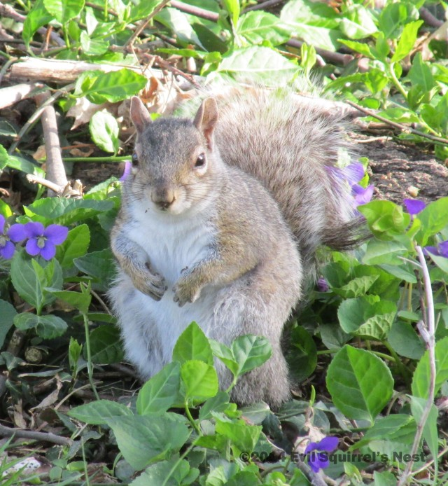 """Now THAT""""S more like a Saturday Squirrel!"""