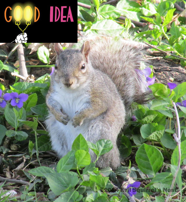 good idea squirrel