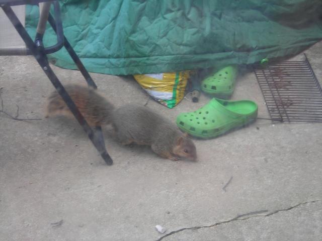 Mmmmmm, getting closer!  I smell peanut!  I smell peanut!  I smell.... ugh, toejam!