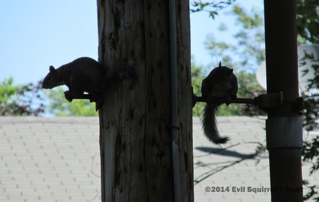 071314squirrel013