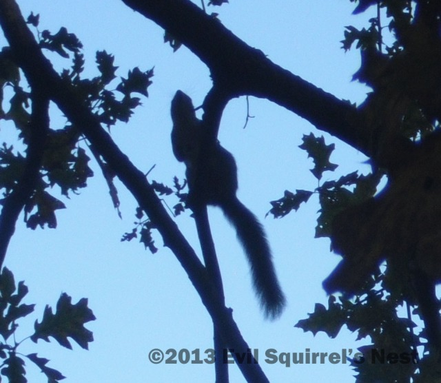 Ninja squirrel lurks in the shadows.