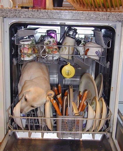 I couldn't have done it without you, Dishwasher Dog!