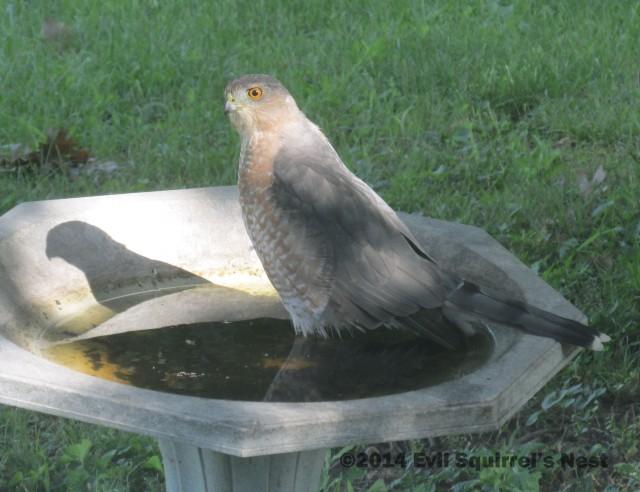 #75 - Big Bird