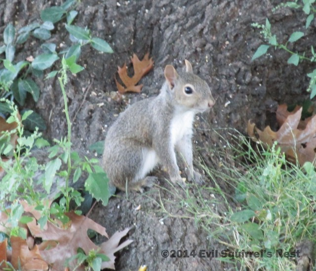 Is this how you pose for a Saturday Squirrel pic?
