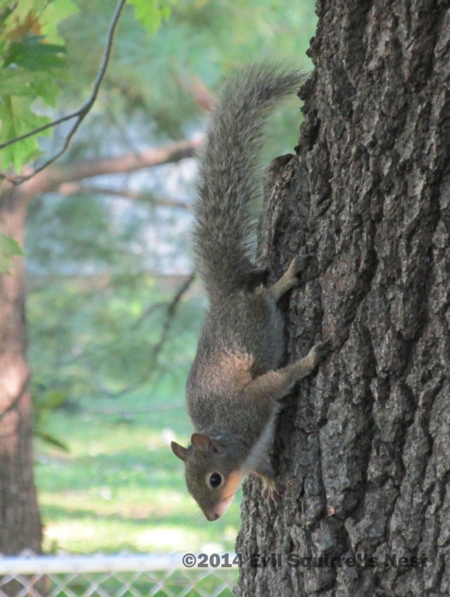 I don't know what Gary Puckett didn't see in young squirrels.