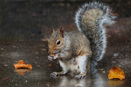 Nobody likes the smell of wet squirrel.