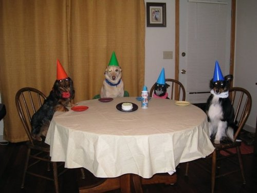 Looks like this party's going to the dogs...