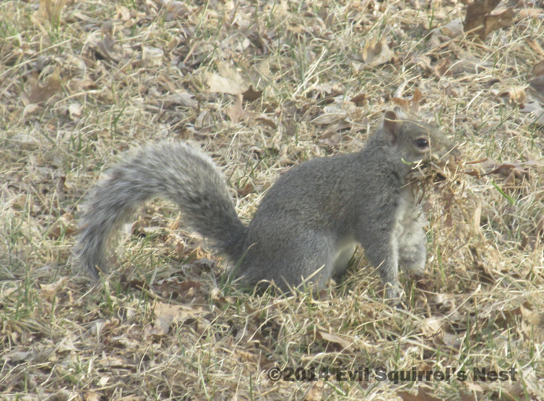 Dr Drey Evil Squirrel S Nest