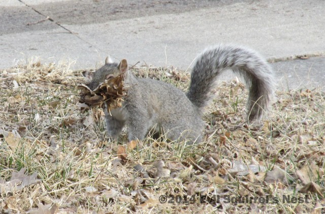 Give that squirrel a union card!