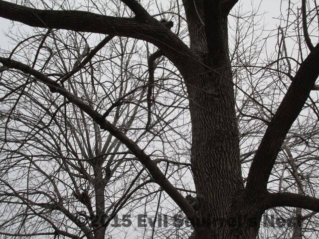 012415squirrel013