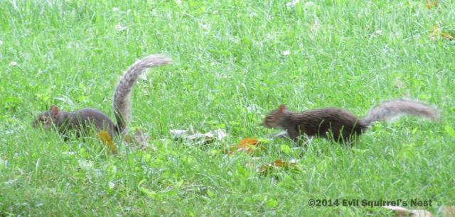 061114squirrel013