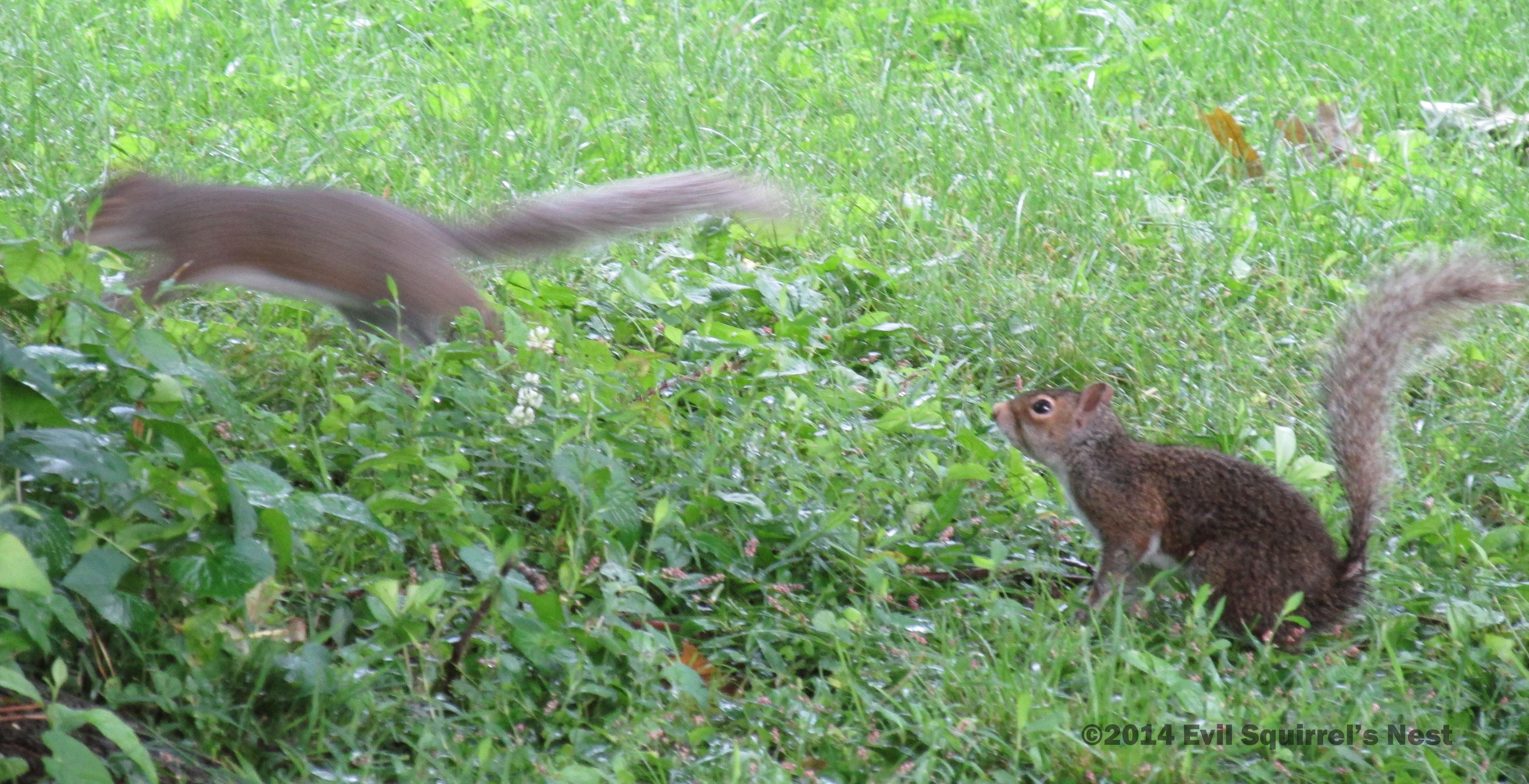 Nutty Squirrel Porno to the squirrel i love   evil squirrel's nest