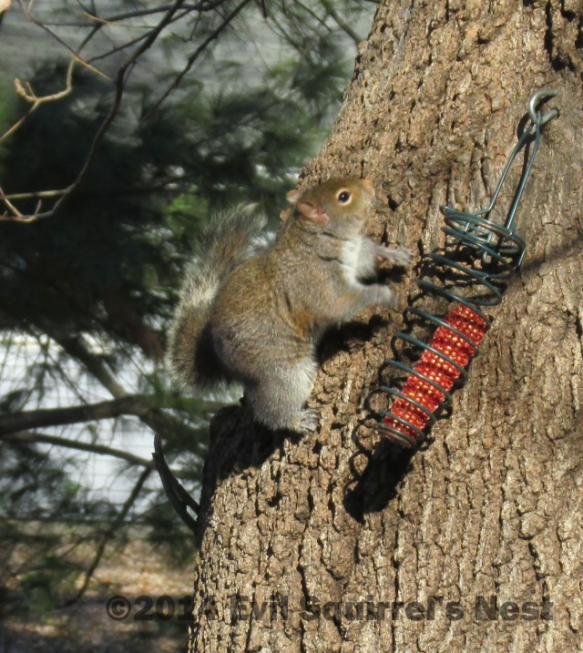 This is an OUTRAGE!!!  There are starving squirrels out here, you know!