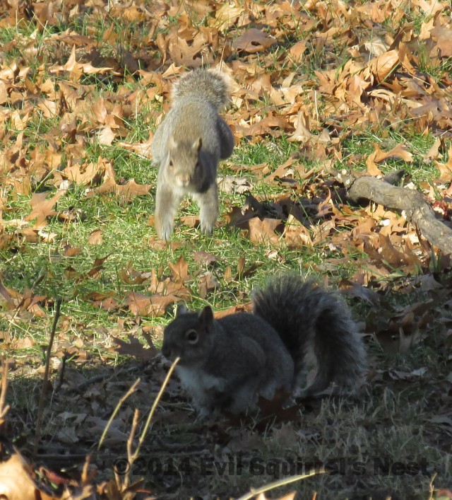 123114squirrel040