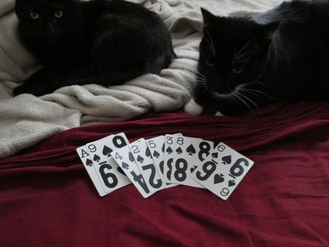 These cards aren't in order.  Biskit, would you please rearrange the cards before I have a catnip fit?