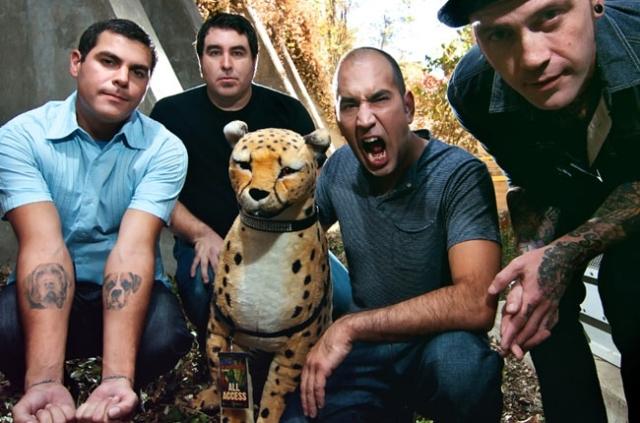 Cheetahs never prosper.