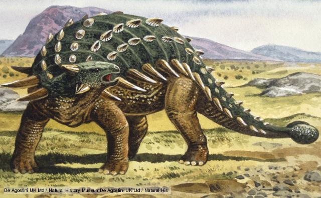 I'm not gonna really show you a picture of swollen ankles... so here's a cute little ankylosaurus instead!