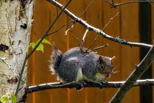 evil squirrel prompt
