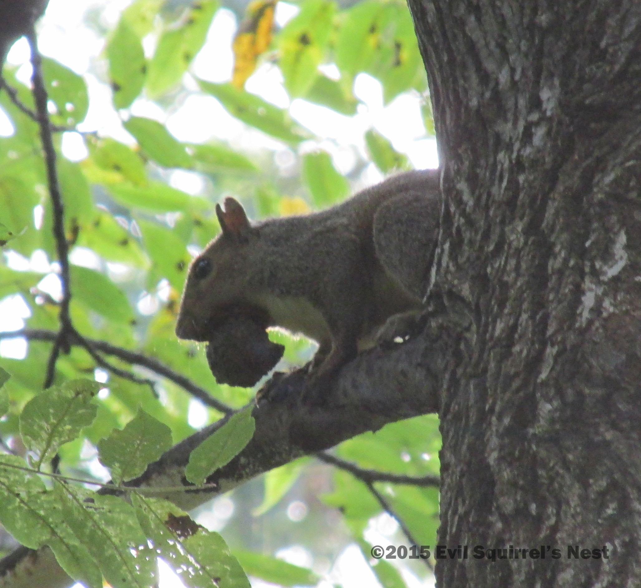 Images of Evil Squirrel Gif - #rock-cafe