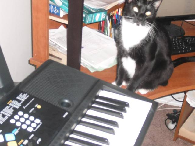 Ody is so glad I retired the keyboard I couldn't play a few years ago.