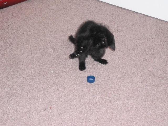 Prepare to meet the claws of death, foolish bottle cap!