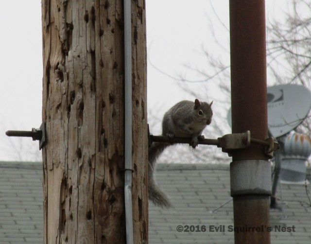 Hello!  I'm Rob Squirrel, and I have DirecTV!