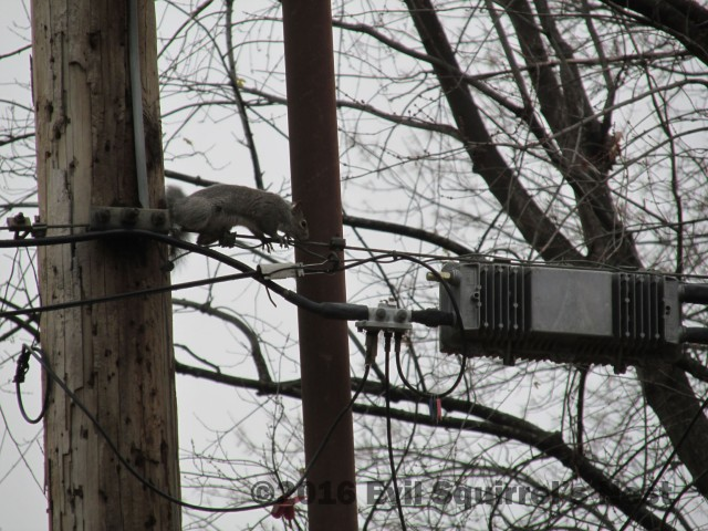 And I'm Super Creepy Rob Squirrel, and I have cable.