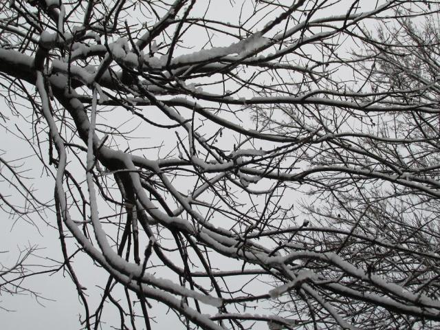 Time for the little ones to shovel off those branches...