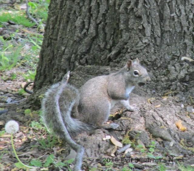 squirrel fist