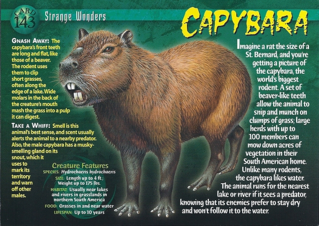 Oh.... well, hello there, Mr. Capybara.  Welcome to The Nest.