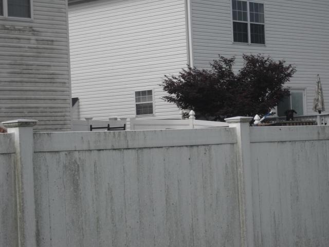 Big dog needs a bigger fence...