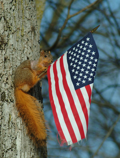 The land of the free and the home of the squirrel's!