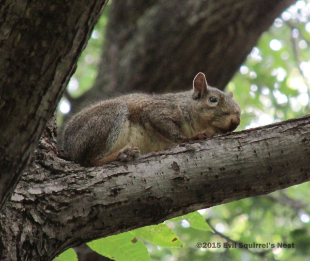 Awwww, another.... um, cute squirrel photo.