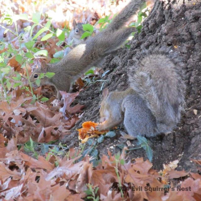 110514squirrel011