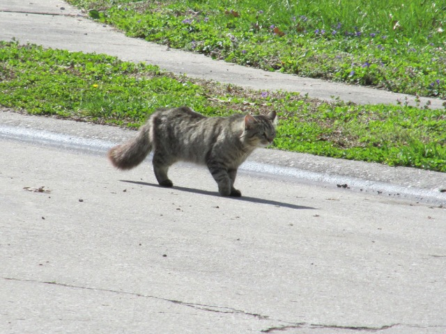 Stray cat strut...