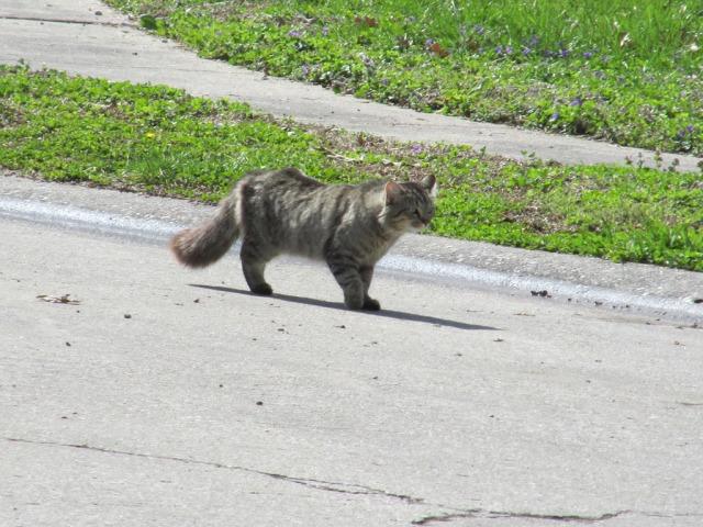 Stray cat strut...