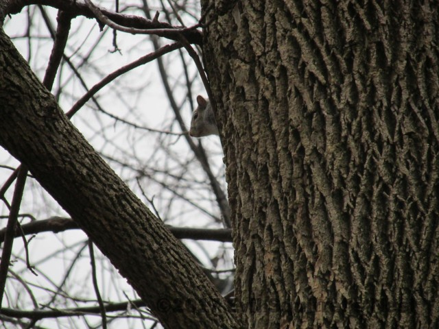 10417squirrel005