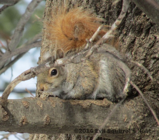 Evil Squirrel's Nest | Where all the cool squirrels hang out!